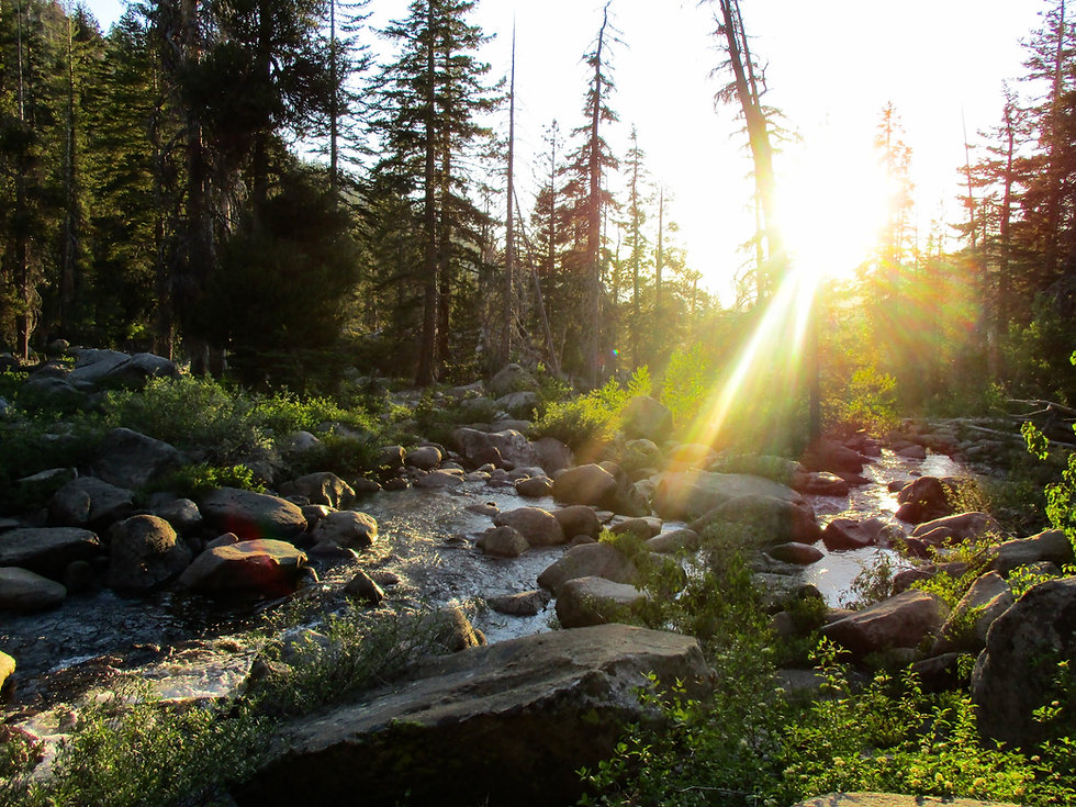 The sun is shining on a stream running over rocks in a pine forest at a summer camp.