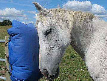 horse pics 14 copy.jpg