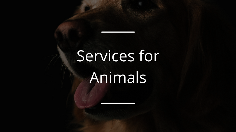 The Best Friends Award for services to animals