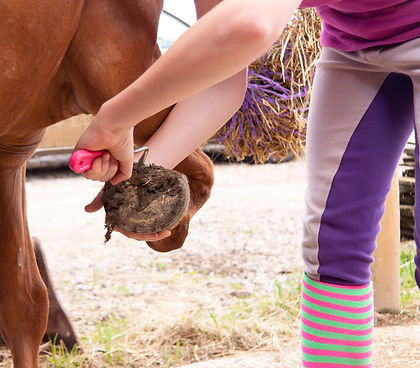 Close up shot of young woman using hoof pick to clean her horses hoof out in readiness for