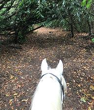 Farm riding.jpg