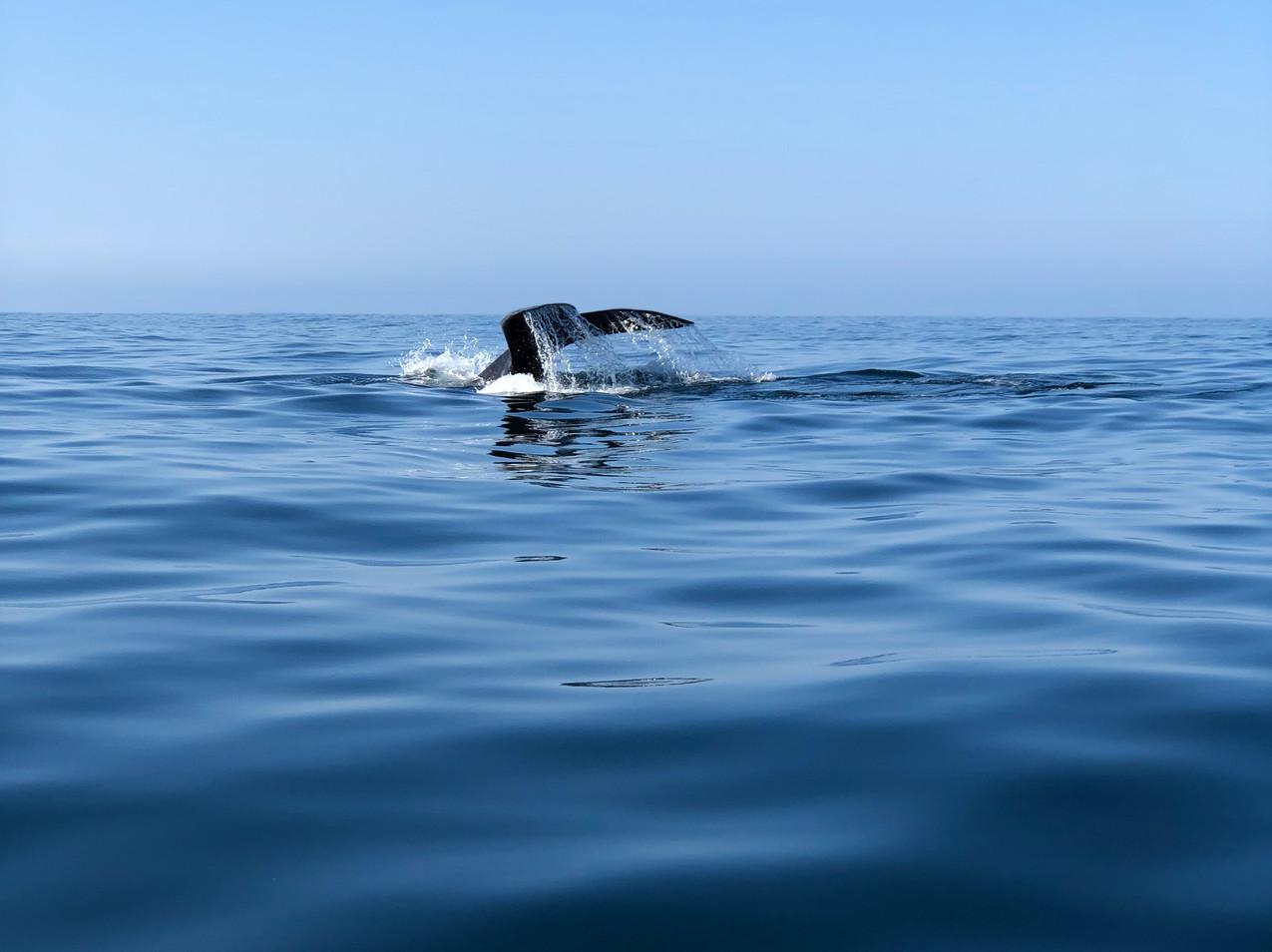 Морское сафари Серф трип Дорога Садов ЮАР Unravel Surf Travel