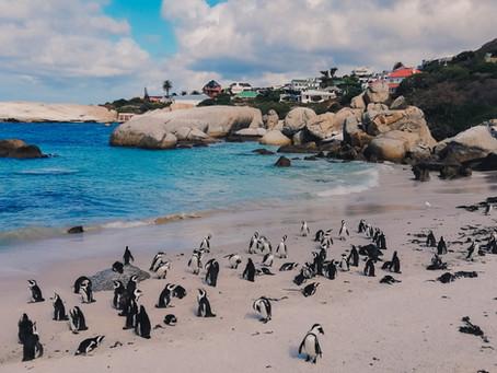 Южная Африка открыта для туристов всех стран