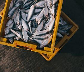 Caja de pescado fresco