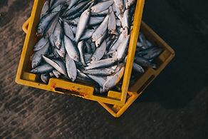 Scatola di pesce fresco