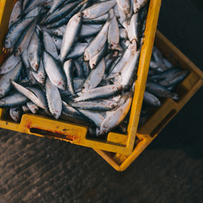 Template Development for Strategic Research Agenda in Agriculture and Fisheries