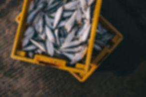 新鮮な魚の箱