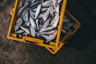 Box von frischem Fisch