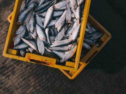 魚兒,和其他動物一樣,能感受痛楚,卻最常被忽略