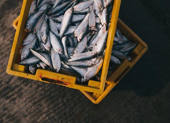 Переработка рыбы и морепродуктов | финансовая модель бизнес плана