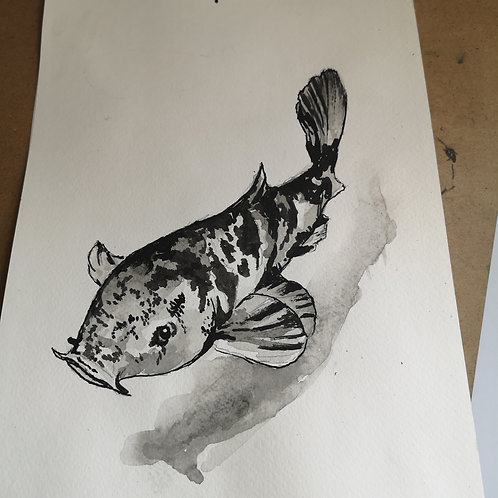 Koi,  Indian ink A4
