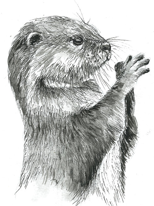 Oscar the otter, Indian Ink Print