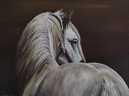 Dapple Grey, Princess - Signed Giclee Print Canvas