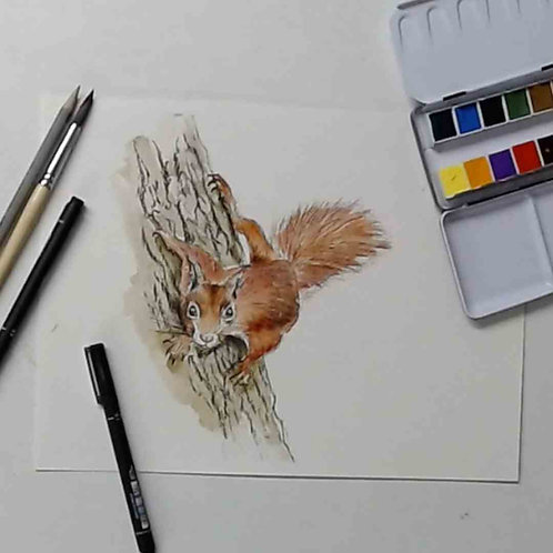 Red Squirrel Pen & Watercolour Tutorial