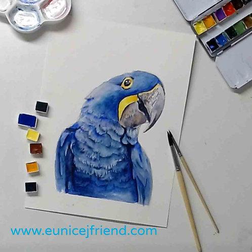 Blue MaCaw Watercolour Tutorial