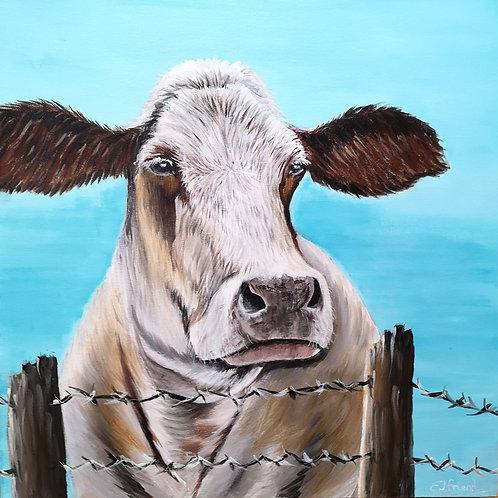 Nosey Moo, Acrylic on Deep Box Canvas