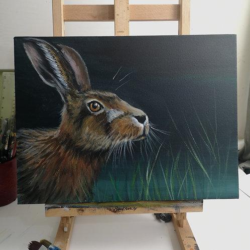 Hare study, 12 x 16 inch acrylic on deep canvas