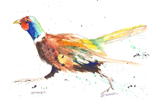 Run Forest Run Pheasant , Original Watercolour