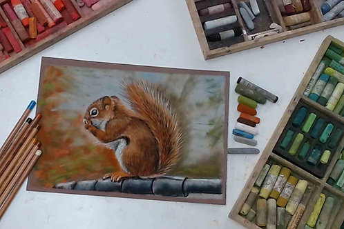 Red Squirrel Pastel Tutorial