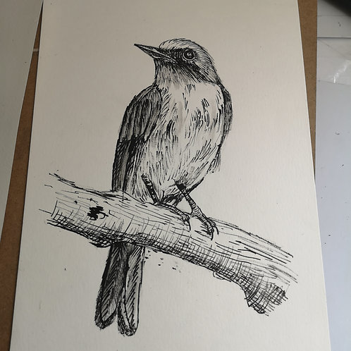 The Crow . Indian ink A4