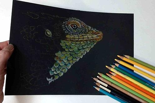 Chameleon colour Pencil Tutorial
