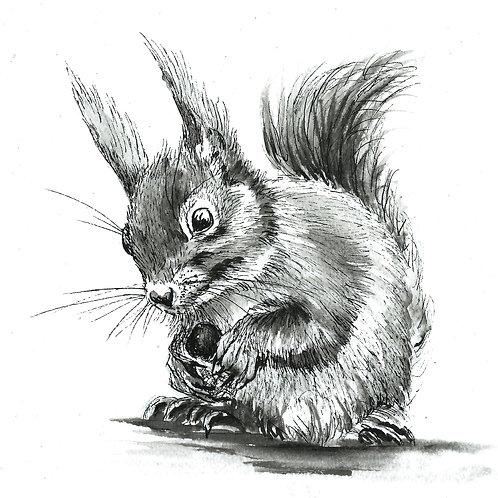 Sammy Squirrel Indian Ink  Print