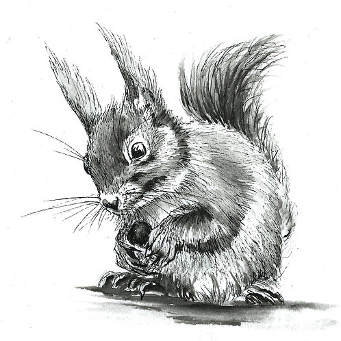 Sammy Squirrel  original Ink Drawing
