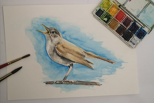 The Nightingale,  A4 watercolour