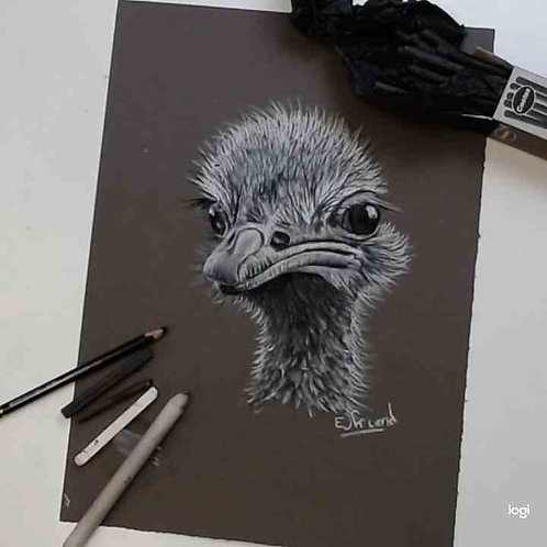 Ostrich Charcoal & Chalk Tutorial