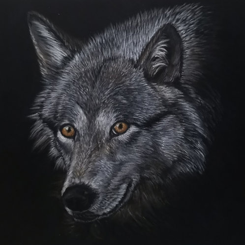 Lone Wolf- Pastel Painting