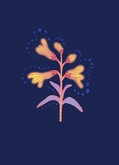 Hoo Flower Poster Set