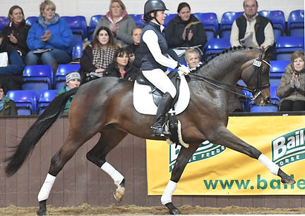 Trakehner stallion Craig