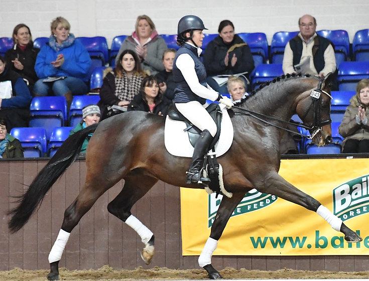 Craig stallion show