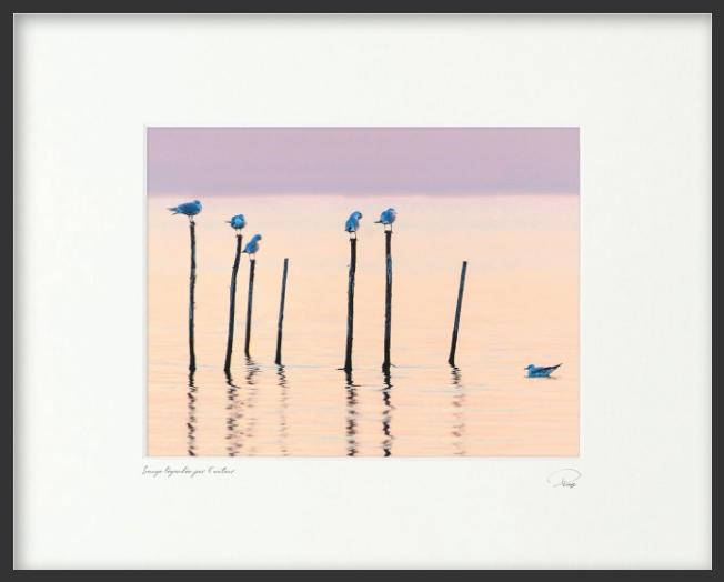 Venise, les oiseaux de la lagune