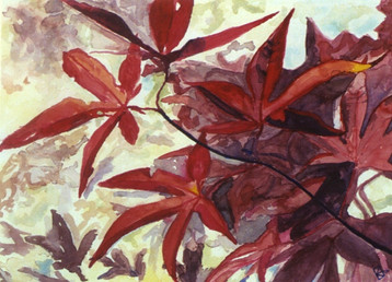 Maple Leaves - Watercolor