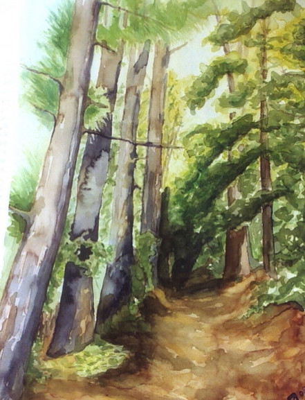 Forest Sunlight - Watercolor