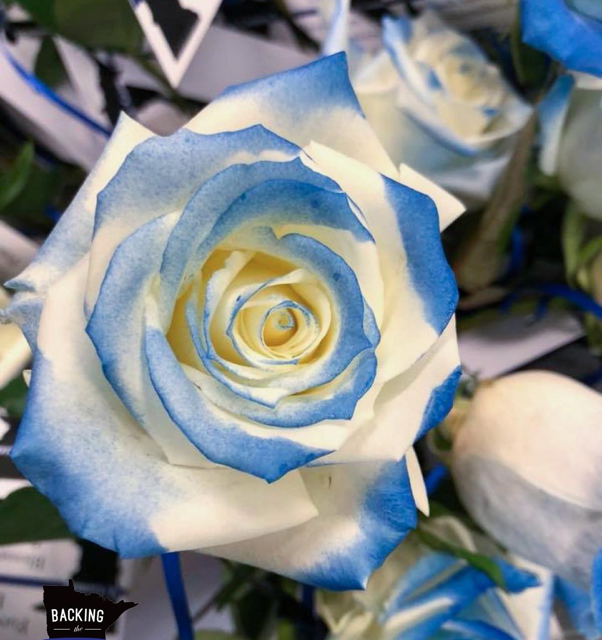 Gomm Rose Prep blog post at backingthebl