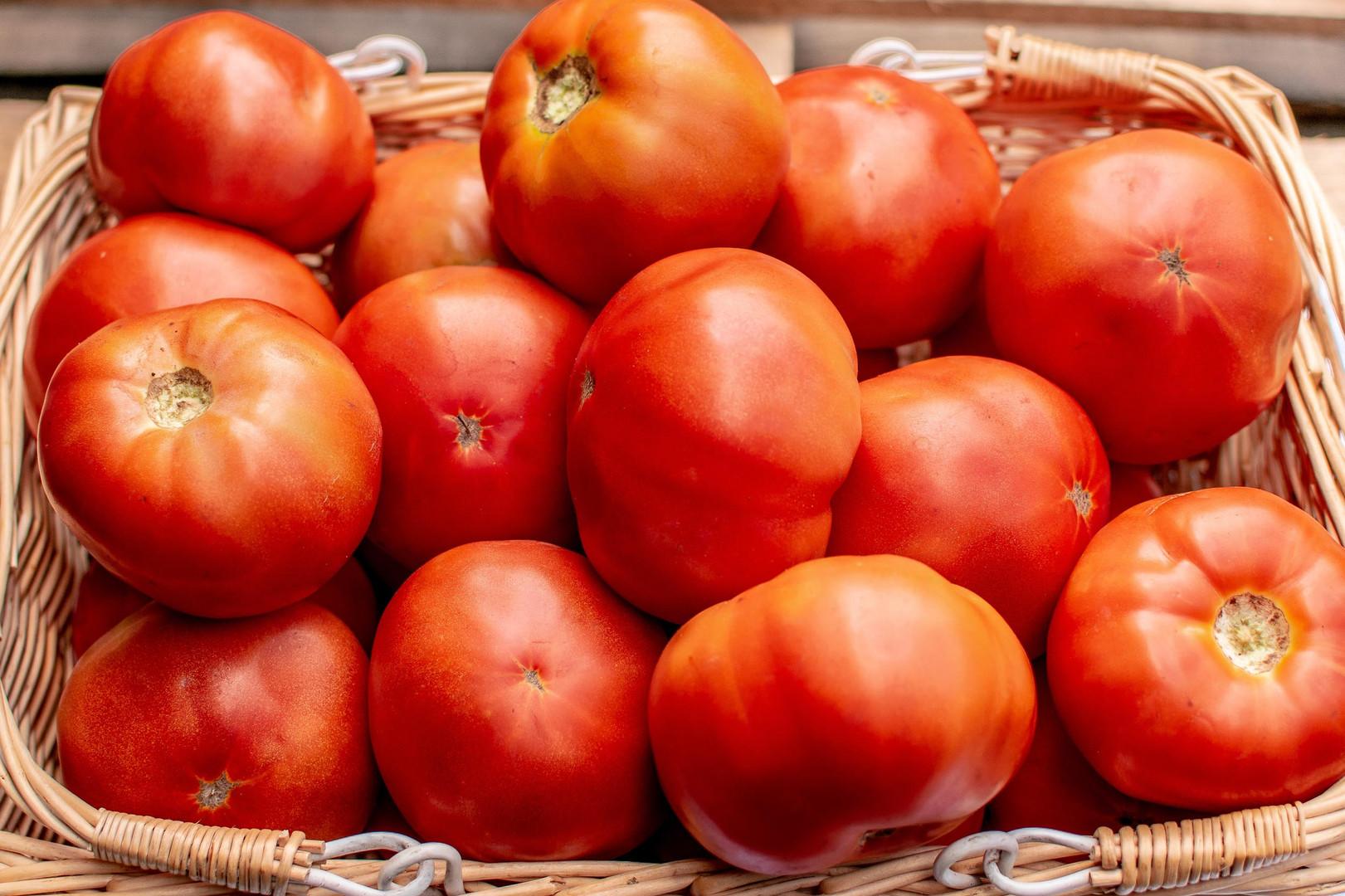 Farmers Alliance_Tomatoes in Basket 2.jp