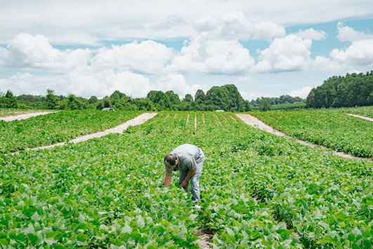 Farmers Alliance_Landscape with Farmer 1
