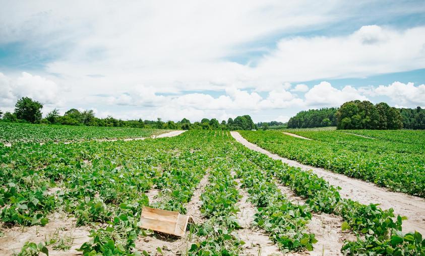 Farmers Alliance_Farm Landscape 2.jpg