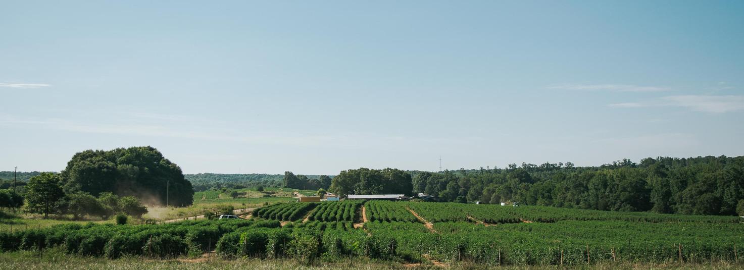 Farmers Alliance_Farm Landscape 5.jpg