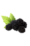 Juicy blackberries offer a slightly tart, sweet flavor and just a little bit of a ribbed texture.