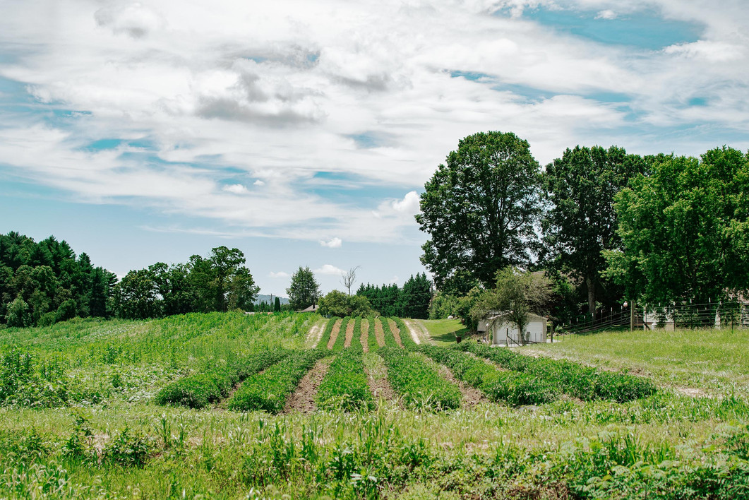 Farmers Alliance_Farm Landscape 1.jpg