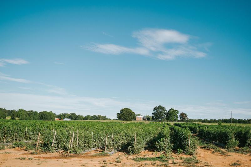 Farmers Alliance_Farm Landscape 10.jpg