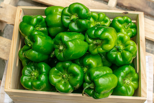 Farmers Alliance_Green Peppers in Crate.