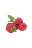 Raspberries are similar to blackberries but are a little more tart, followed by a nice sweetness.