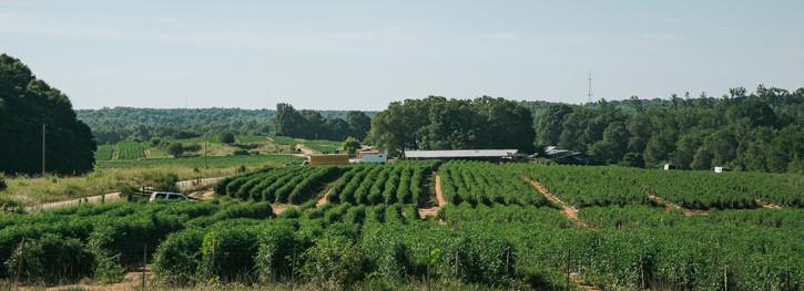 Farmers Alliance_Farm Landscape 7.jpg