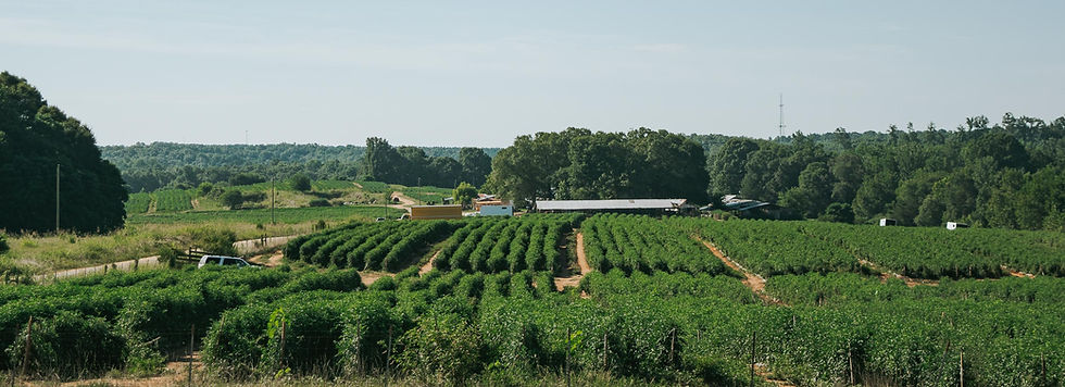 Farmers Alliance_Farm Landscape 7.jpg