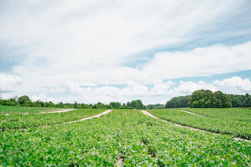 Farmers Alliance_Farm Landscape 11.jpg