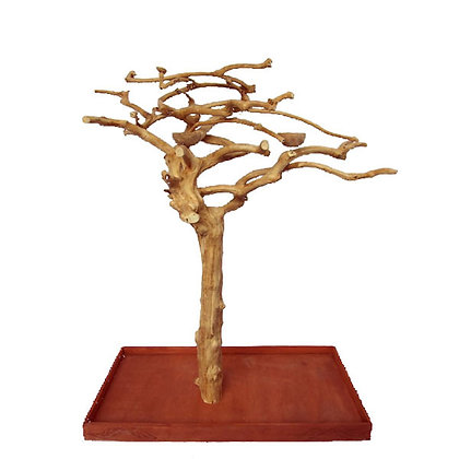 Java Tree Wood Tree  - Small  * IN STORE PURCHASE ONLY